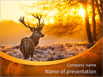 Red Deer in Morning Sun. PowerPoint Template