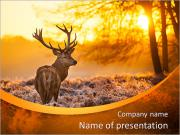 Red Deer in Morning Sun. PowerPoint Templates