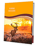 Red Deer in Morning Sun. Presentation Folder