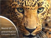 Leopard portrait PowerPoint Templates