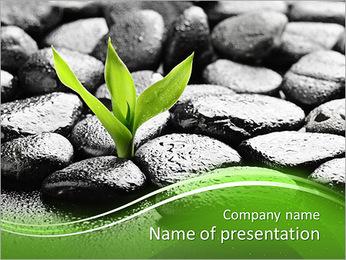 Piedras de basalto de Zen y bambú con el rocío Plantillas de Presentaciones PowerPoint