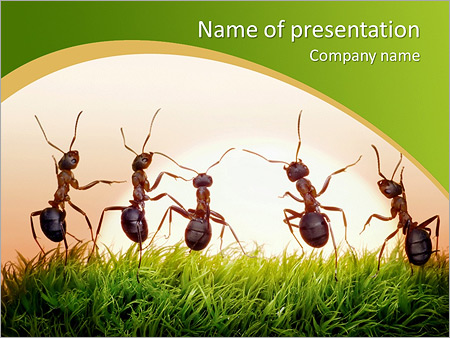 team of ants on sunrise joy of life concept of success powerpoint