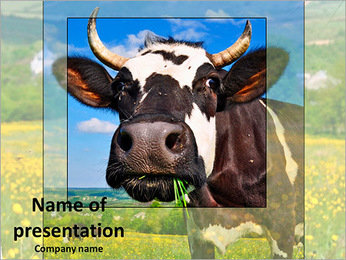 Cows in a meadow PowerPoint Template
