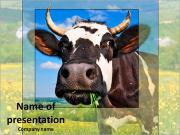 Cows in a meadow PowerPoint Templates