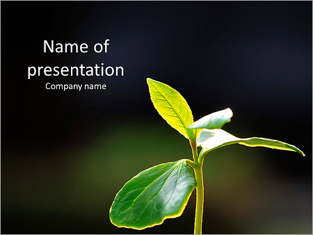 Green Plant On A Dark Background Powerpoint Template Backgrounds