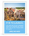Little Pig Farm Ad Template