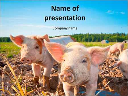 little pig farm powerpoint template backgrounds google slides
