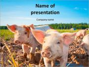 Little Pig Farm Шаблоны презентаций PowerPoint