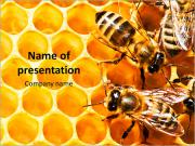 Honeycomb and bees PowerPoint Template