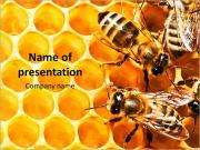 Nido de abeja y las abejas Plantillas de Presentaciones PowerPoint