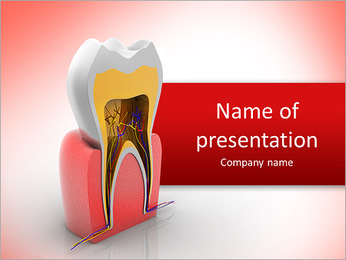 The layout of the human tooth in the context of PowerPoint Template