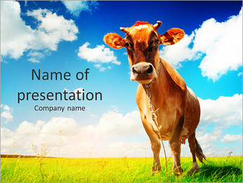 The cow on a green lawn PowerPoint Template