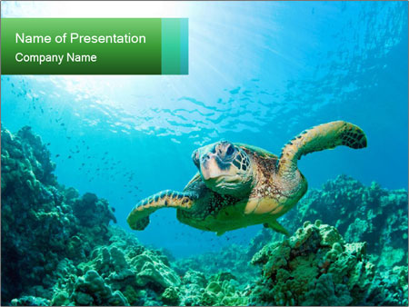 0000101448 PowerPoint Template