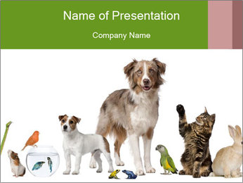 0000101505 PowerPoint Template