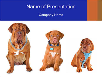 0000101556 PowerPoint Template