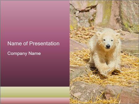 0000101656 PowerPoint Template
