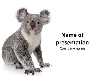 Koala in Zoo PowerPoint Template