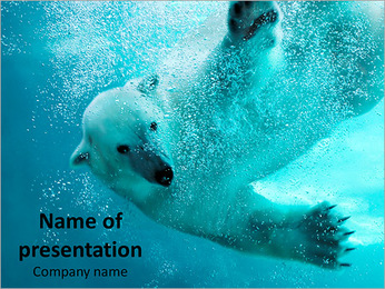 Polar Bear in Water PowerPoint Template