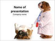 Dulldog in Veterinarian Costume Sjablonen PowerPoint presentaties