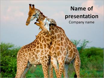 Giraffe Love PowerPoint Template