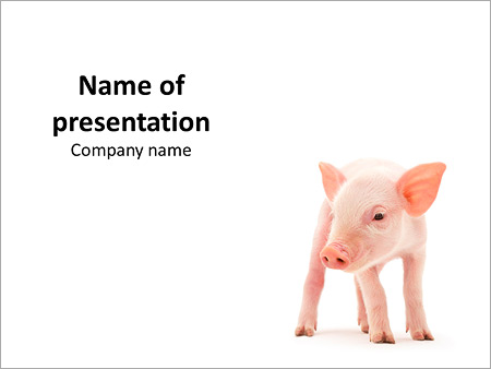 New Born Pig PowerPoint Template, Backgrounds & Google Slides - ID ...