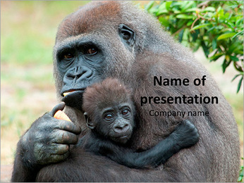 Gorilla Holds Baby PowerPoint Template