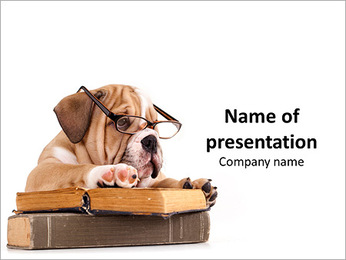 English Bulldog Puppy in Glasses PowerPoint Template