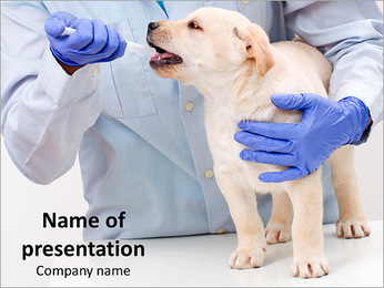 Veterinary with Labrador Puppy PowerPoint Template