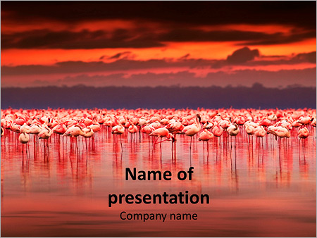 pink flamingos in africa powerpoint template & backgrounds id, Modern powerpoint