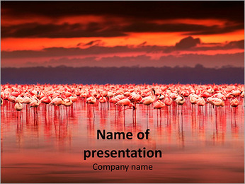 Pink Flamingos in Africa PowerPoint Template