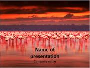 Africa powerpoint template smiletemplates pink flamingos in africa powerpoint templates toneelgroepblik Image collections