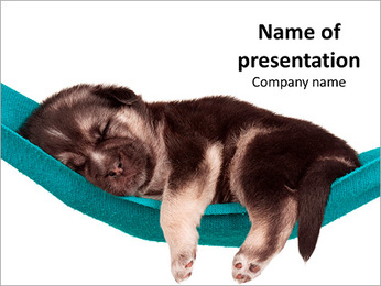 Cute Puppy Sleeping in Hammock PowerPoint Template