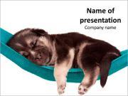 Cute Puppy Sleeping in Hammock PowerPoint Templates