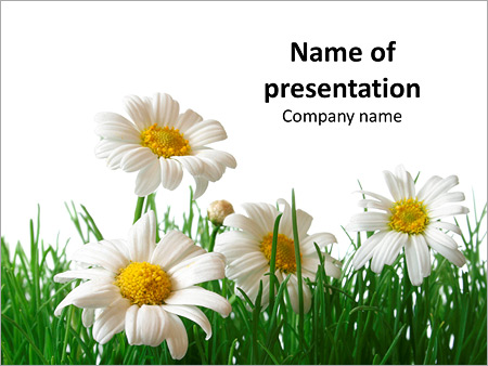 Spring Chamomile Powerpoint Template  Backgrounds Id