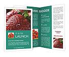 0000011784 Brochure Templates