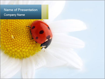 Spotted Ladybug PowerPoint Template
