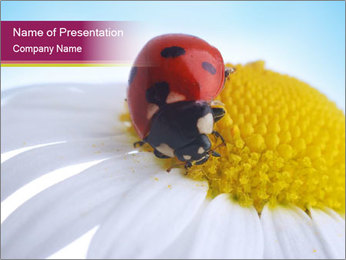 Camomile with Red Ladybug PowerPoint Template