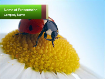 Cute Ladybug PowerPoint Template