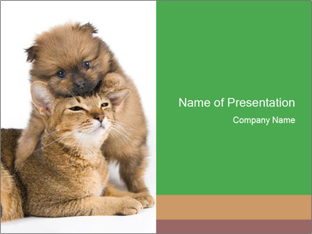 friendship between a dog and a cat powerpoint template