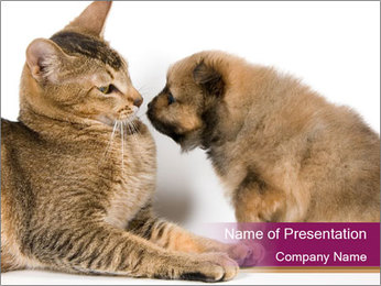 Curious Puppy And Cat PowerPoint Template