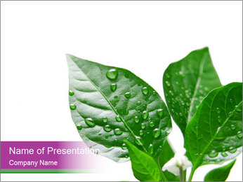 Organic Green Plant PowerPoint Template