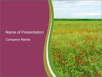 Wild Poppy Field PowerPoint Template