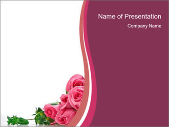 Pink Roses Isolated on White PowerPoint Template