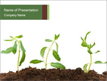 Organic Garden PowerPoint Template