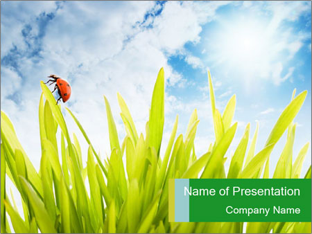 ladybug on green grass powerpoint template & backgrounds id, Modern powerpoint