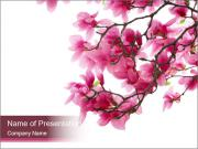 Pink Magnolia PowerPoint Templates