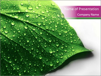 Dewdrops on Freen Leaf PowerPoint Template