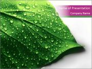 Dewdrops on Freen Leaf PowerPoint Templates