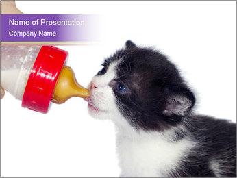 Newborn Kitten Drinking Milk PowerPoint Template