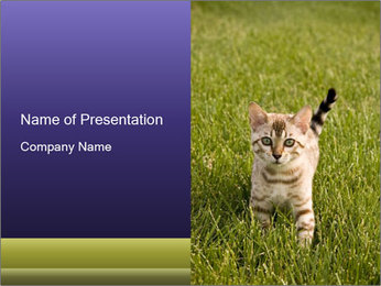 Cute Cat on the Grass PowerPoint Template